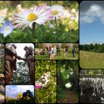 Capturing Colour: A Year through the lens in Three Rivers