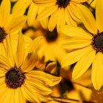 Malt Garden & Gardening tips with Ware in Bloom & RHS - FREE