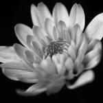 Bean Photography / Belinda Bean