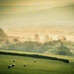 The Part Singers Easter week release - John Tavener's The Lamb