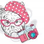 Cornelia Frost Photography / Pet Photographer