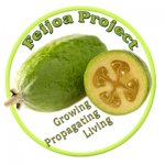 Feijoa Project / The Feijoa Project